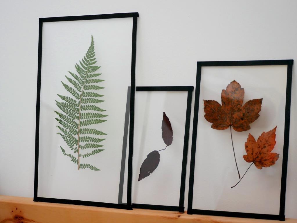 farne und herbstbl tter als bilder hang zum gr nen. Black Bedroom Furniture Sets. Home Design Ideas